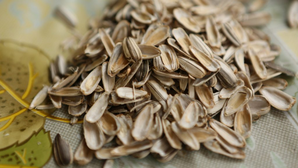 Sunflower seed shells