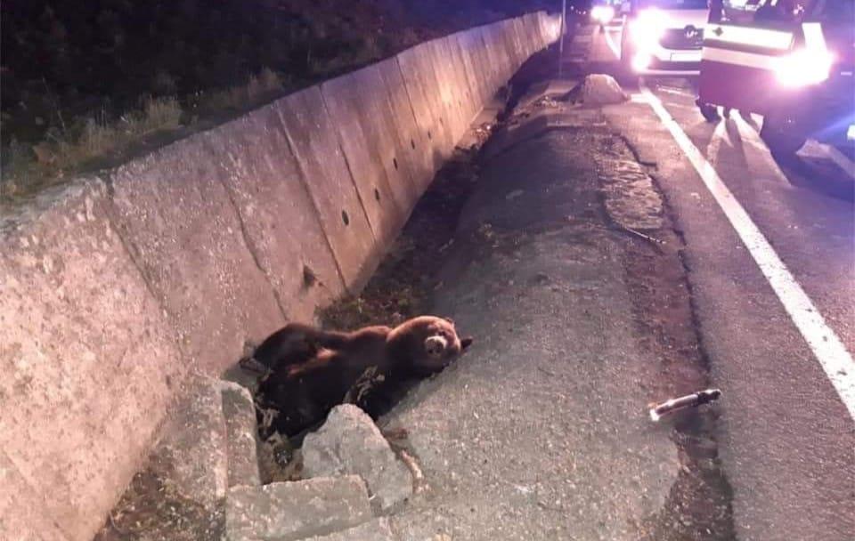 Cub hit by a car