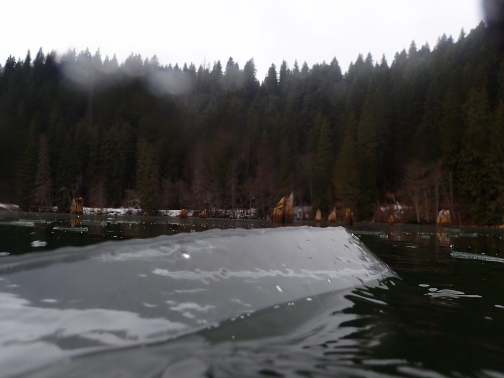 Underwater forest of Red Lake