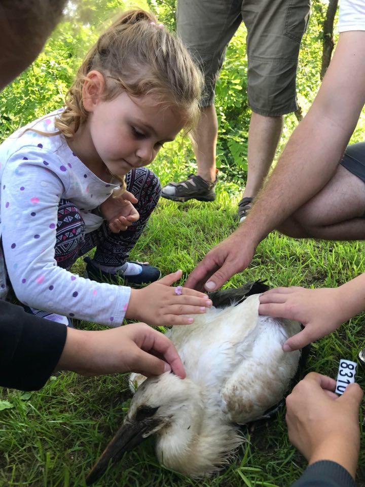 Kids petting stork