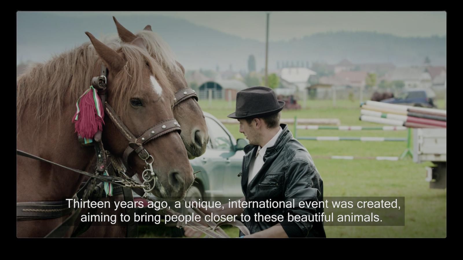 Horse Festival in Szeklerland